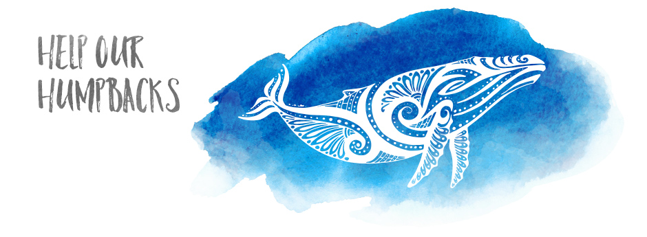 whale_month_home_banner